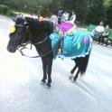Прокат лошадей для праздников