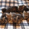 Отдадим домашних котят в хорошие руки, фотография 2