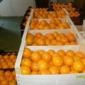 Фрукты и овощи без посредников из Испании