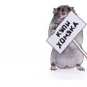 Продам ручных Джунгарских хомячков!!!