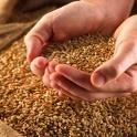 Продам пшеницу,муку,отруби