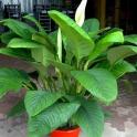 Комнатные растения по выгодным ценам