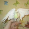попугаи карела,девочка и мальчик,