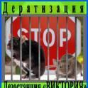 Дезостанция «ВИКТОРИЯ», уничтожение грызунов (дератизация) в Алматы.