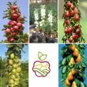 Колоновидные яблони, саженцы в Алматы.