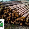 Деревянные опоры ЛЭП (линий электропередач)