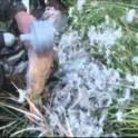 Насадка для ощипывания птицы - быстро и легко !