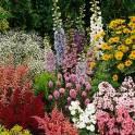 Растения для сада и дома
