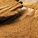 Продам муку,пшеницу,отруби