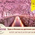 Туры в Японию на цветение сакуры - 6 дней от 942 $