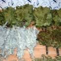 Веники для бани, дубовый веник, березовый веник, эвкалипт, черноклен
