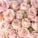 PARADISE Flowers — Международная служба доставки цветов и подарков