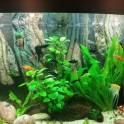 3д декорации любых размеров, в любой цветовой гамме на заказ в аквариум , фотография 3