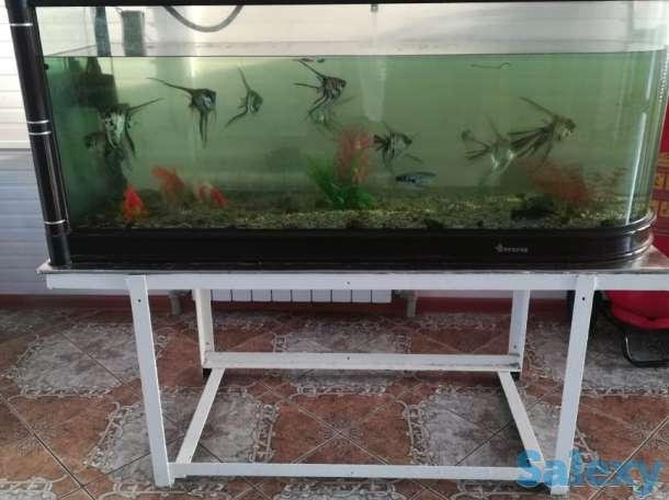 Продается аквариум с живыми рыбками, фотография 1