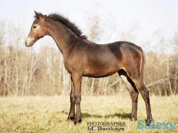 Продажа пони. Пони-ферма., фотография 4