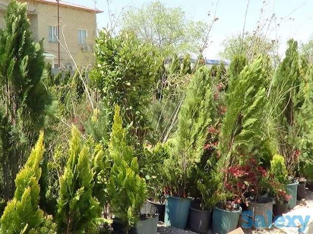 Озеленение, саженцы, хвойные деревья, удобрения, фотография 4