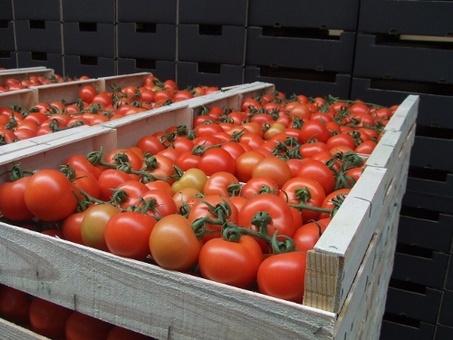 Фрукты и овощи без посредников из Испании, фотография 5
