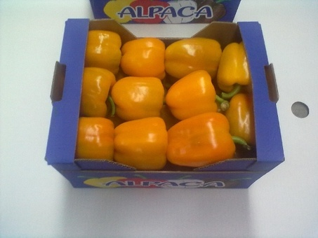 Фрукты и овощи без посредников из Испании, фотография 9