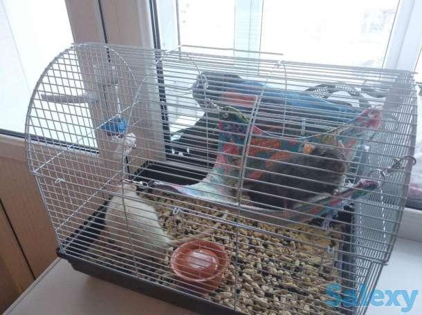 Продам крыс с клеткой, фотография 2