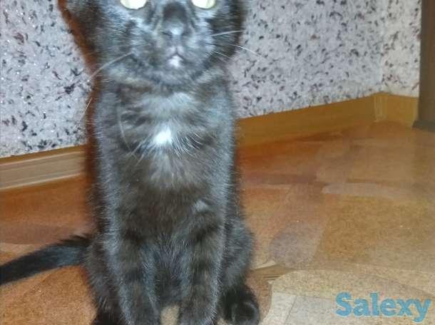 Котята, фотография 4