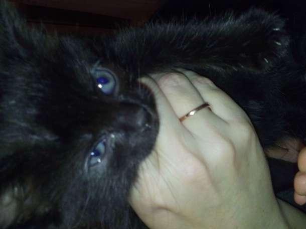 Дарю котят, фотография 1