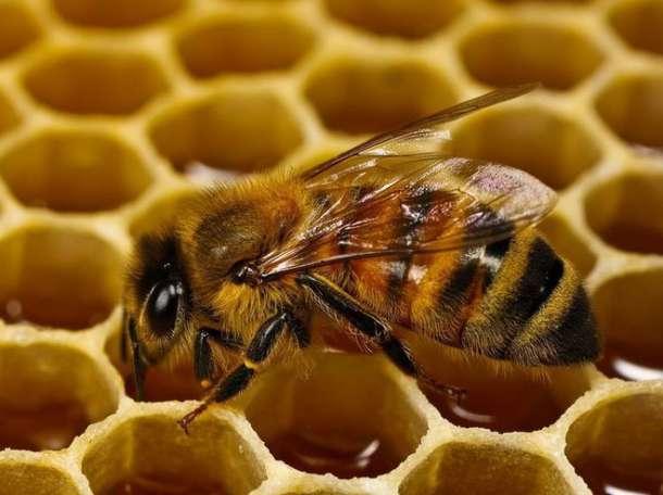 Продаю лесной мед, фотография 1
