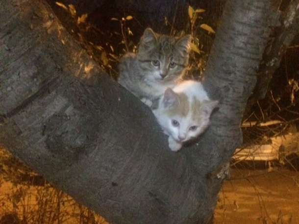 Котёнку нужен дом , фотография 1