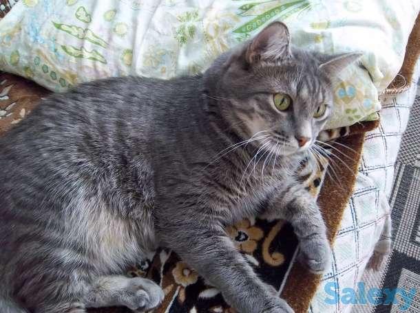 Отдам красивого кота, фотография 1