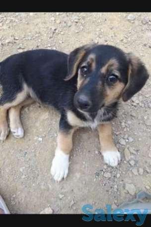 Отдам девочек щеночков собачек, фотография 1