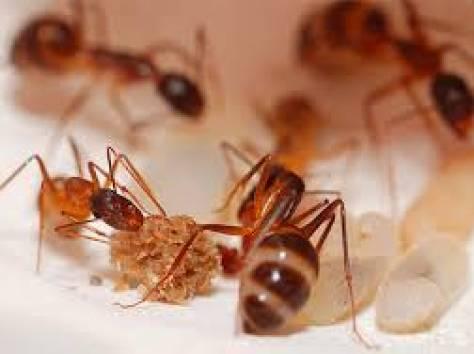 Уничтожение муравьев, фотография 1