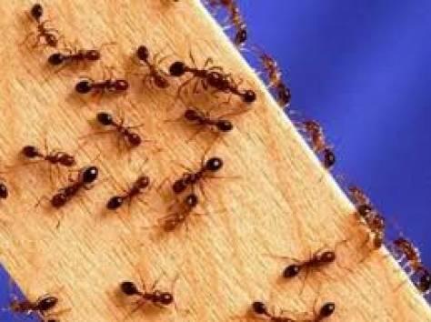 Уничтожение муравьев, фотография 4