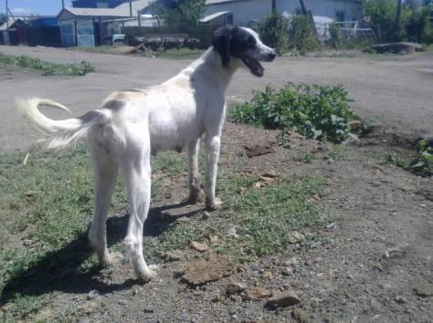 Продам щенков, фотография 2