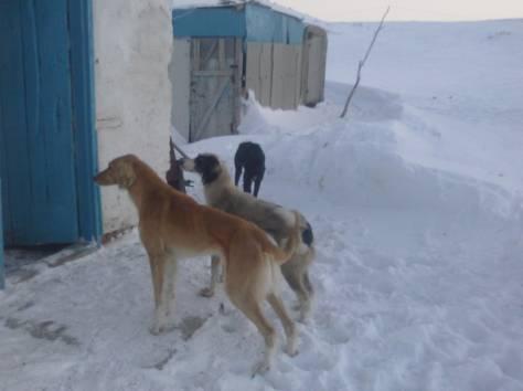 Продам щенков, фотография 8