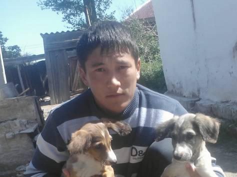 Продам щенков, фотография 10