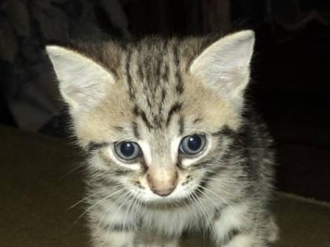 котенок 1,5мес., фотография 1