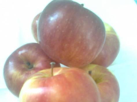Продаются яблоки, фотография 1