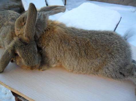 Кролики, фотография 3
