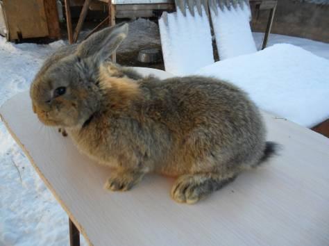 Кролики, фотография 4