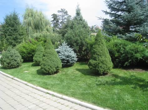 Озеленение. Алматы