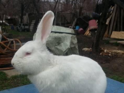 Продам кроликов , фотография 3