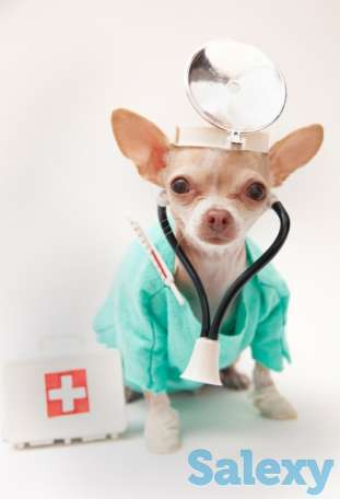 Ветеринарный врач на выезд Алматы, фотография 1