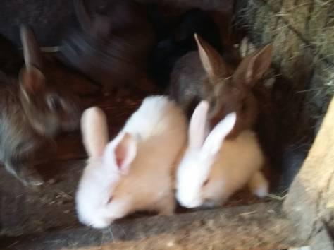 Продам крольчат, фотография 2