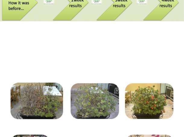 100% органическое удобрение, для всех типов цветов и растений, отлично подходит для реанимации растений!, фотография 3