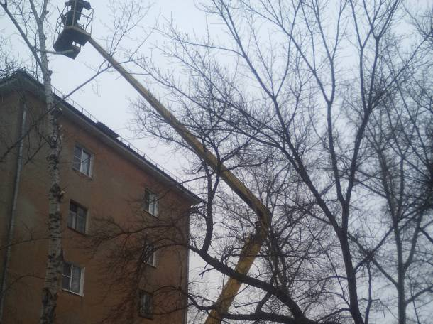 Спил и формовка деревьев, фотография 2