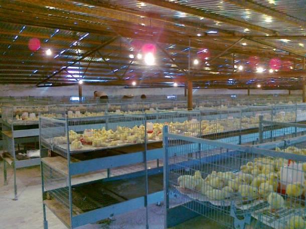 оборудование для птицефабрики, фотография 1