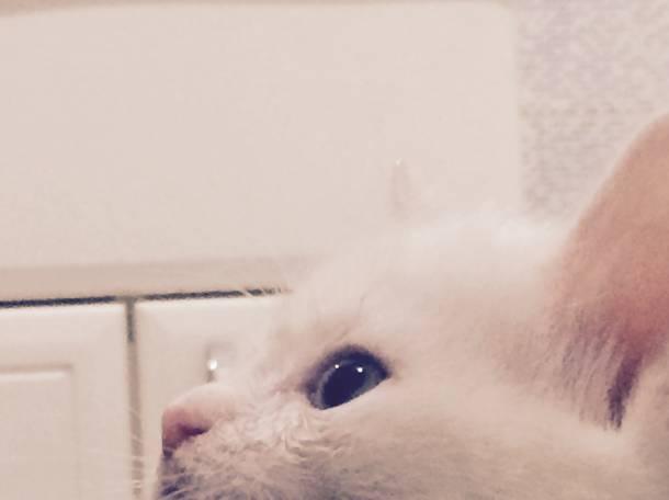 Пропала кошка, фотография 4