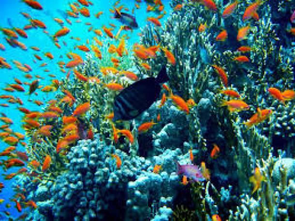 продажа аквариумных рыб собственного разведения(каждая 10 рыбка бесплатно), фотография 2