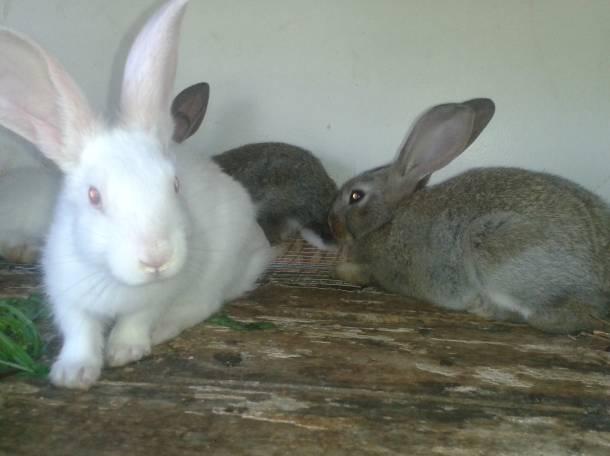 Продам кроликов., фотография 1