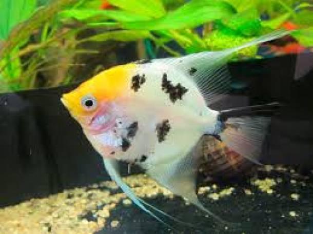 аквариумы и рыбки, фотография 2