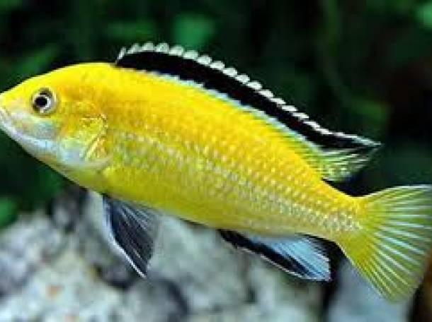 аквариумы и рыбки, фотография 7